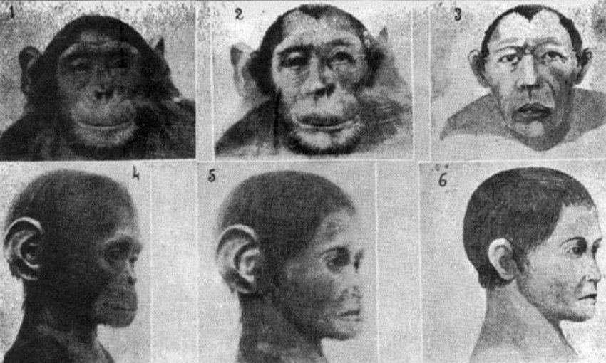 Эксперименты по созданию гибрида человека с животным