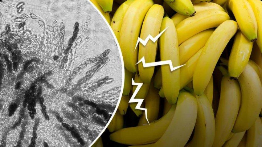 Музыка, пчёлы, бананы: 10 обычных ресурсов на грани исчезновения