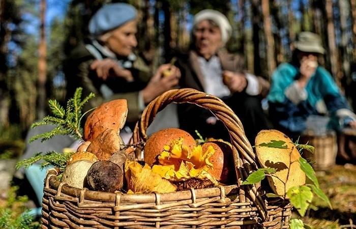 К кому относятся ограничения и штрафы по сбору ягод и грибов в лесу в 2021 году