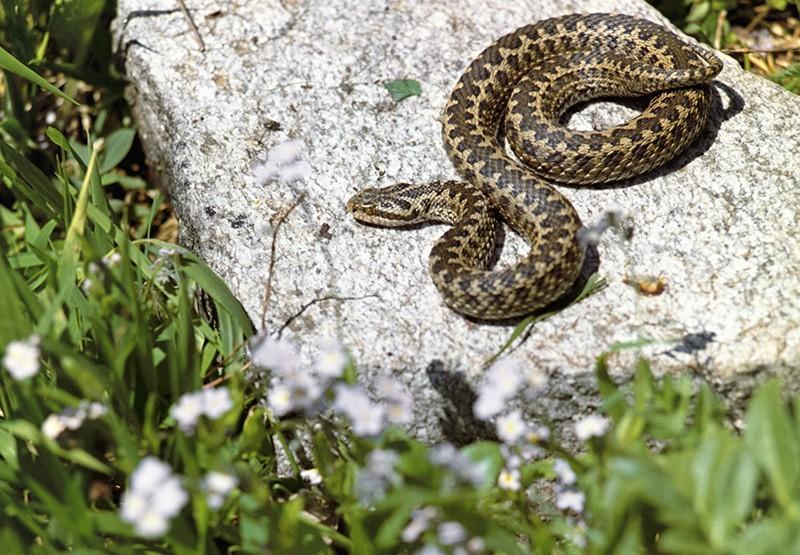 Народные приметы 12 июня, в день Исаакия-Змеевика