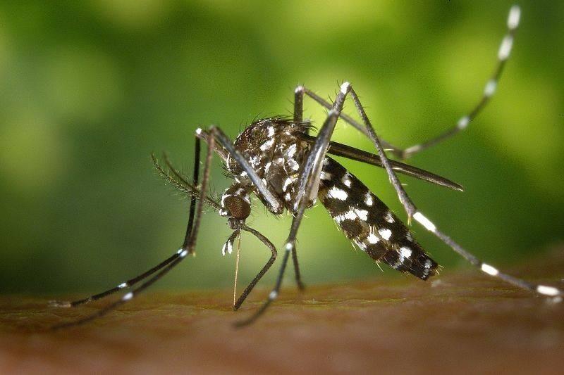 Опасны ли тучи комаров, мошек и божьих коровок для туристов и местных жителей Анапы