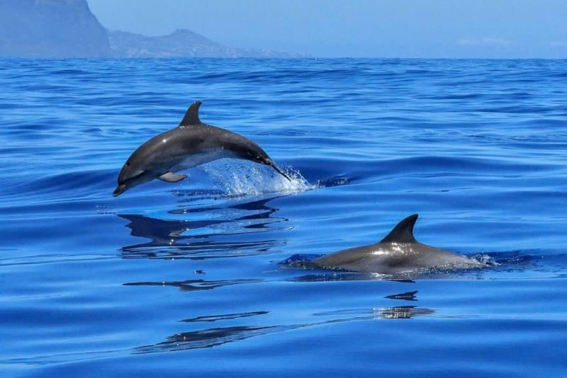 Всемирный неофициальный праздник День дельфинов отмечают 23 июля 2021 года
