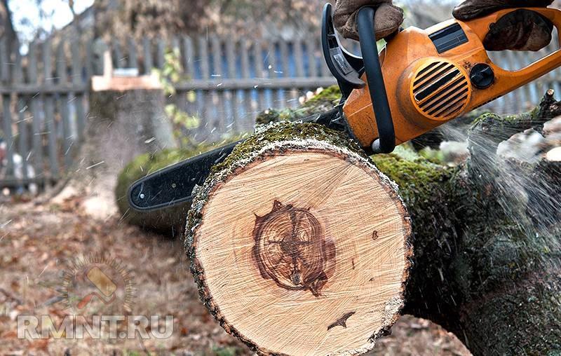 Какой штраф за спиленное дерево на своем участке могут наложить местные власти