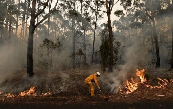 В Турции взяли под контроль все лесные пожары