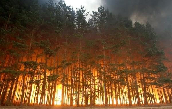 За сутки в Якутии потушили 14 лесных пожаров