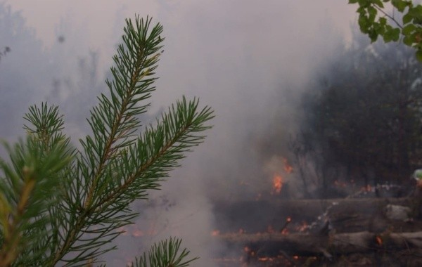 Ситуация с лесными пожарами в Марий Эл остается сложной