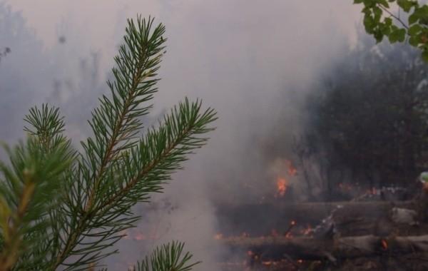 В Марий Эл площадь тления лесов уменьшилась до 6 гектаров