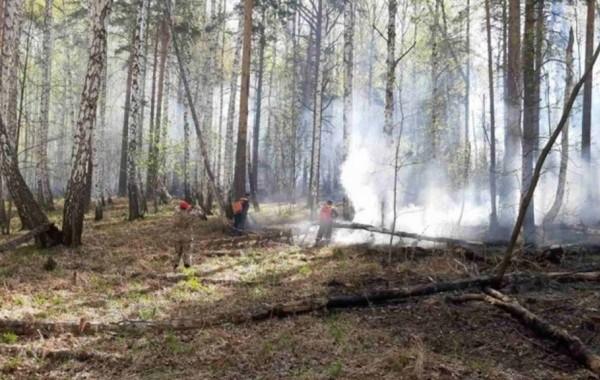 Ситуация с лесными пожарами в Якутии стабилизировалась