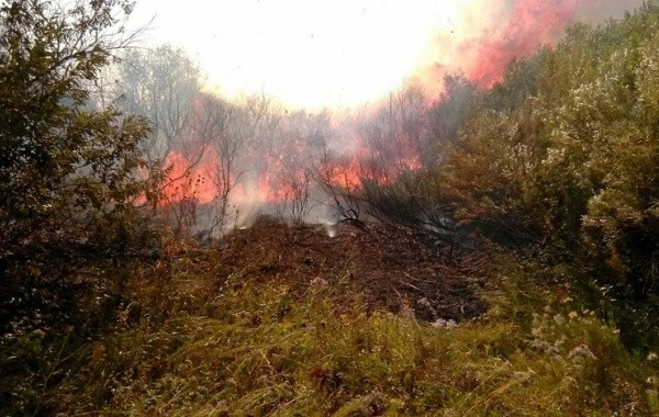 В Башкирии возросла площадь лесных пожаров