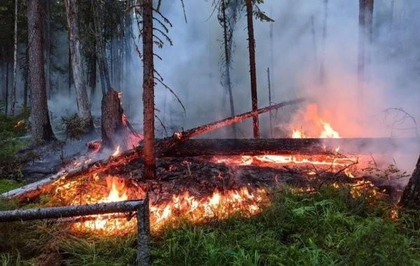 В России за сутки потушили почти 15тыс. гектаров горящего леса