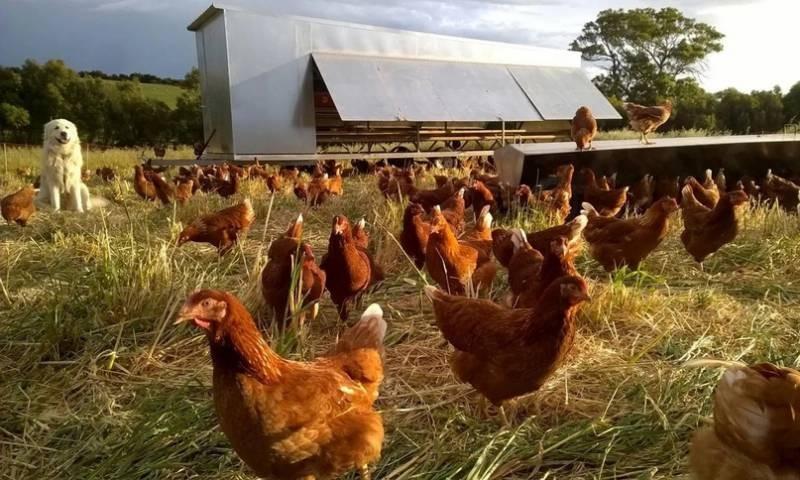 ВС напомнил о запрете разводить на садовых участках сельскохозяйственных животных