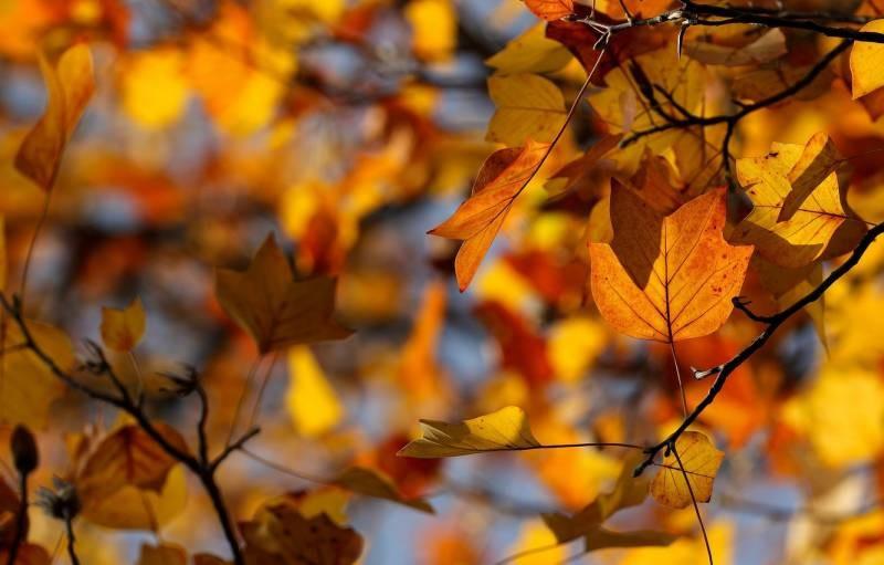 Запрет убирать листья с могил после Покрова, как древнее русское суеверие
